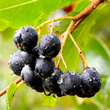 admedic-ziola-aronia-owoce