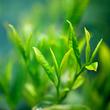 admedic-ziola-zielona-herbata